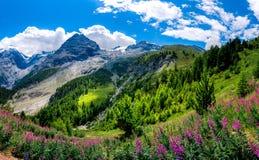 Italy, parque nacional de Stelvio Estrada famosa a Stelvio Pass em cumes de Ortler imagens de stock