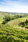 Italy - Piedmont region. Barbera vineyard Stock Photos