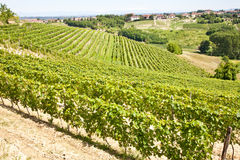Italy - Piedmont region. Barbera vineyard Royalty Free Stock Image