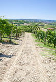 Italy - Piedmont region. Barbera vineyard Stock Images