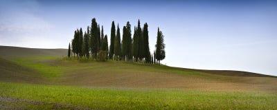 Italy, Pienza - April 24 2018: Group of italian cypresses near San Quirico d´Orcia. Tuscany, Italy Stock Image
