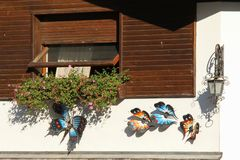 Butterflies. Decorative ironwork sculpture. Italy, Rocca Pietore - August 26 2016: the view of the decorative ironwork sculpture butterflies on a wall on August Stock Photo