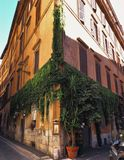 italy rome gata Arkivbilder