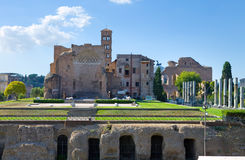 Italy. Rome. A kind on the Forum Royalty Free Stock Photo