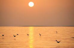 Italy, Sardegna,the sea. The sea at sunset and birds in Sardegna island royalty free stock images