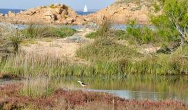 Italy Sardinia sea and bird Royalty Free Stock Image