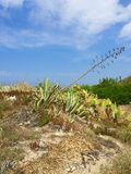 Sicily. Italy Sicily nature on the beach Lascari royalty free stock images