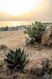 Italy, Sicily, San Vito lo Capo. Sunrise on the coast of Sicily, Italy Royalty Free Stock Image
