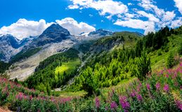 Italy, Stelvio National Park. Famous road to Stelvio Pass in Ortler Alps. Alpine landscape Stock Images