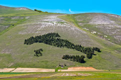 Italy trees in Castelluccio of Norcia Stock Image