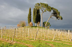 Italy Tuscan countryside. Typical Tuscan hill countryside landscape Royalty Free Stock Photography