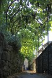 Italy, Tuscany, Chianti zone, Montefioralle village. Italy, Tuscany, Chianti zone, Montefioralle village, the alley and grapes royalty free stock photos