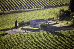 Italy, Tuscany, Chianti zone, Montefioralle village. Italy, Tuscany, Chianti zone, Montefioralle village, the vineyard and old house stock photo