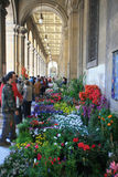 Italy, Tuscany, city of Florence. Italy, Tuscany, city of Florence, the flowers market in the city Stock Photography