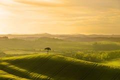 italy tuscany Lantligt landskap på gryning arkivbild