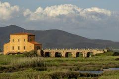 Italy Tuscany Maremma Castiglione della Pescaia Grosseto, natural reserve of Diaccia Botrona. Tuscany Maremma Castiglione della Pescaia Grosseto, natural reserve royalty free stock photo