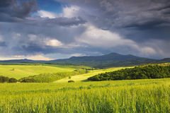 Italy. Tuscany. Rural landscape Stock Photos