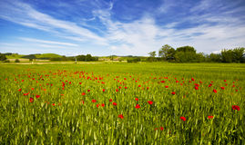 Italy. Tuscany. Rural landscape Stock Images