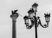 Italy, venice, the street lamps of the place saint marc and its pigeons. Black and white image royalty free stock photos