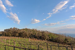 Italy, Vineyard at Noli Royalty Free Stock Photo