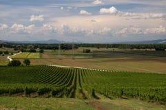 italy vingård Royaltyfria Bilder