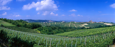 italy vingårdar Arkivfoto