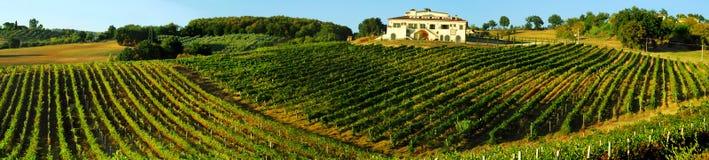 italy vingård Arkivbild
