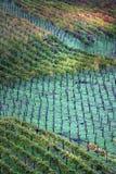 Italy, vinhedos no outono Fotografia de Stock