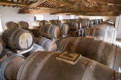 ITALY WINEMAKING BARRELS CELLAR. Wine barrels in cellar in Italy, Tuscan stock photography