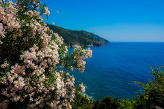 Italyan sea. Italian sea in summer day royalty free stock photography