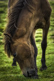 Itch on my hoof. Royalty Free Stock Photography