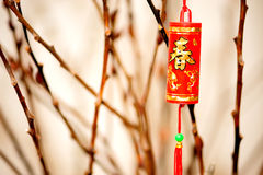Item in Chinese new year. Decorative firecracker with background of gingko branch in chinese new year
