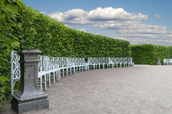 Item Park with smoothly trimmed bushes Royalty Free Stock Photo