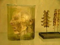 Items de la exposición imagen de archivo