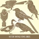 Items del vector: pájaros Fotos de archivo