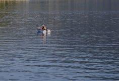 Ithaca- Griechenland am 12. Juli Mannfischen in Ithaca Ithaca am 12. Juli Griechenland Stockfotografie