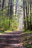 Itinéraire aménagé pour amateurs de la nature Images stock