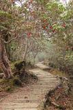 Itinéraire aménagé pour amateurs de la nature avec le rhododendron Himalaya Photo libre de droits