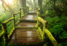 Itinéraire aménagé pour amateurs de la nature de ka d'ANG en parc national d'inthanon de doi photographie stock libre de droits