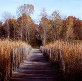 Itinéraire aménagé pour amateurs de la nature de passerelle - Minnesota Images stock