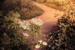 Itinéraire aménagé pour amateurs de la nature et buissons de floraison Image stock