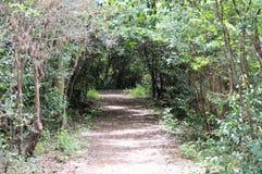 Itinéraire aménagé pour amateurs de la nature par la forêt Photographie stock