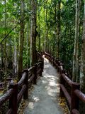 Itinéraire dans la forêt Photographie stock libre de droits