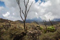 Itinéraire de Kilimanjaro Machame Photo libre de droits