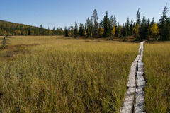 Itinéraire de marche en Laponie Images libres de droits