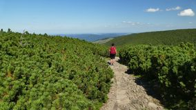 Itinéraire parmi le pin de montagne dans la montagne photo libre de droits