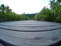 Itinéraires aménagé pour amateurs de la nature passage couvert, forêt de palétuvier Images libres de droits