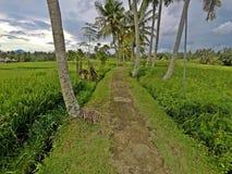 Itinerario al terrazzo del riso in Ubud, Bali fotografie stock