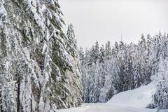 Itinerario che si situa nella foresta negli Stati Uniti Immagini Stock Libere da Diritti