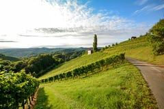 Itinerario del vino attraverso la vigna ripida accanto ad una cantina nella zona produttrice del vino della Toscana, Italia Immagini Stock Libere da Diritti